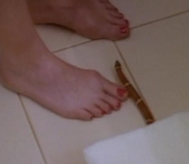Feet pauley pics perrette
